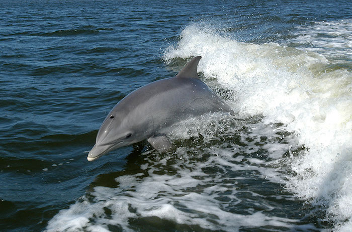 68 great dolphins pictures and legends about these fairytale animals