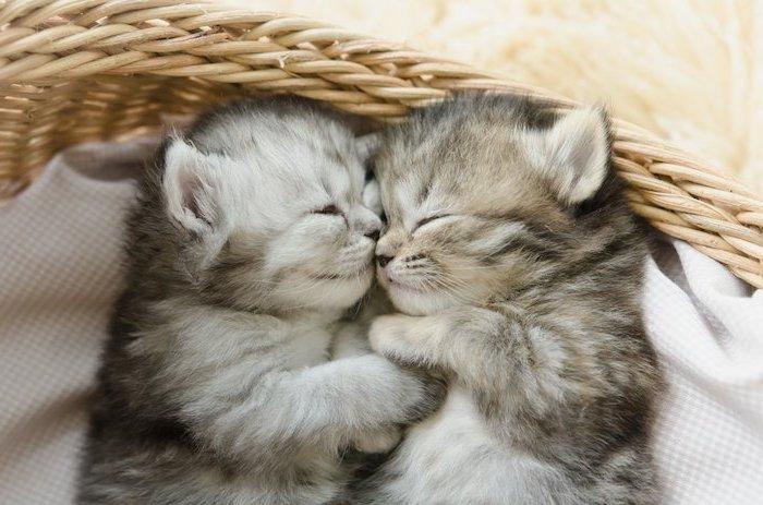 hier sind zwei katzen - graue, kleine und schlafende süße katzen -süße gute nacht mein schatz bilder
