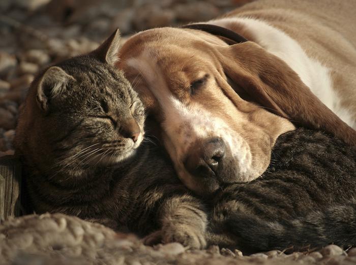 hier sind süße gute nacht bilder - eine schlafende graue katze und ein schlafender gelber hund mit einem gelben hund und einem tepprich