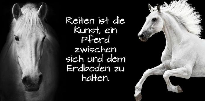 zwei weiße wilde pferde mit schwarzen augen und mit einer wießn dichten mähne, pferdebilder und schlne pferdesprüche, ein weißes pferd im sprung