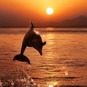 68 tolle Delfine Bilder und Legenden um diese märchenhaften Tiere