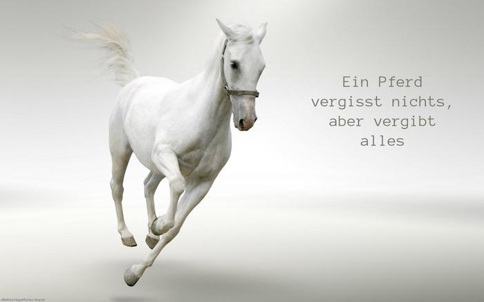 hier ist ein weißes pferd mit seinem weißen schwanz und mit schwarzen augen und mit einer weißen mähne, pferdesprüche und pferdebilder