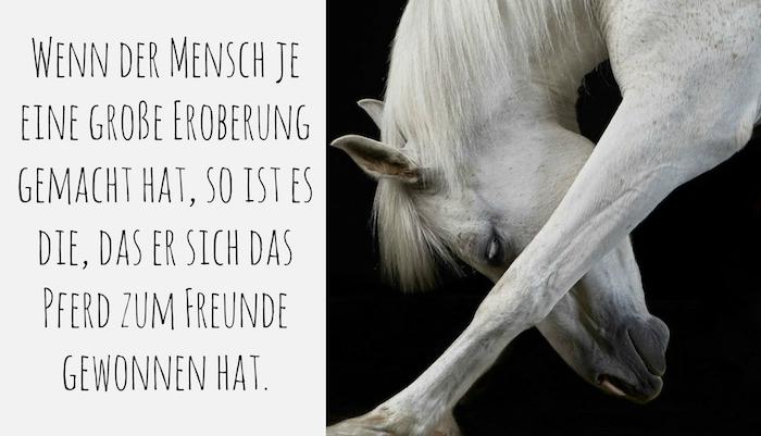 hier ist ein pferdebild mit einem weißen pferd mit einer langen weißen mähne und mit großen schwarzen augen, pferdesprüche und pferdebilder