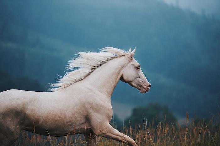 werfen sie einen blick auf diese idee zum thema pferdebilder und sehr schöne pferdesprüche - hier finden sie ein weißes schönes wildes pferd mit einer weißen dichten mähne und blauen augen