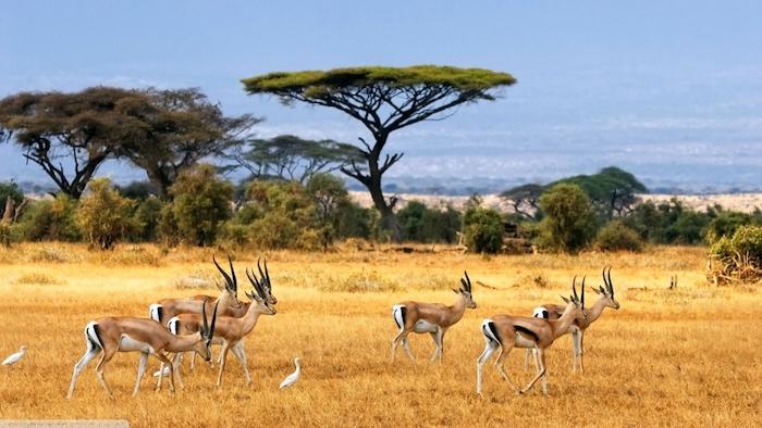 sansibar stadt verlassen und auf safari in afrika gehen tolle erlebnisse sansibar urlaub reise ferien