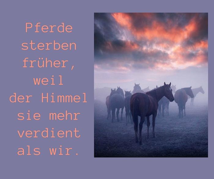 eine wilde pferde mit schwarzen und lila pferden, himmel mit pinken und lila wolken, ein pferdebild mit einem schönen pferdespruch