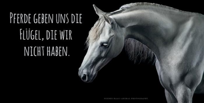 hier ist noch ein graues pferd mit schwarzen augen und einer weißen langen mähne, pferdebilder mit pferdesprüchen, ein zitat