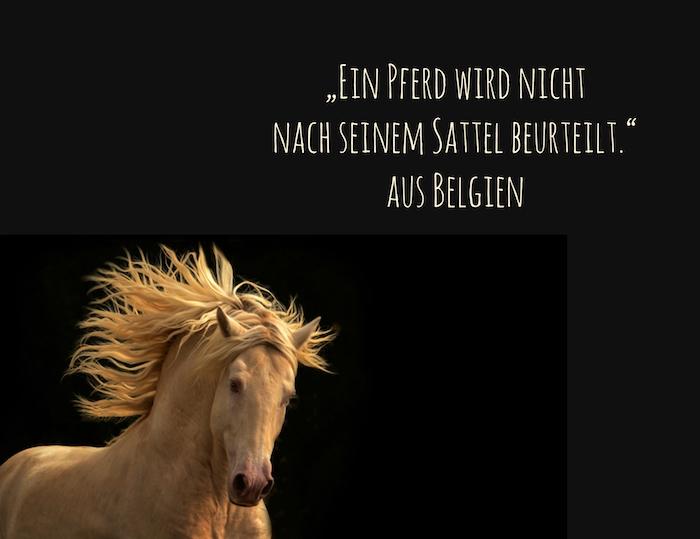 hier ist ein laufendes, wildes, gelbes pferd mit schwarzen augen und ein bild mit einem sprichwort aus belgien, schöne pferdesprüche, pferdebilder
