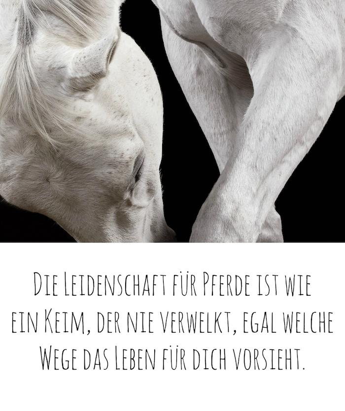 werfen sie einen blick auf dieses bild mit einem weißen pferd mit einer weißen langen mähne und mit schwarzen augen, schönes pferdebild