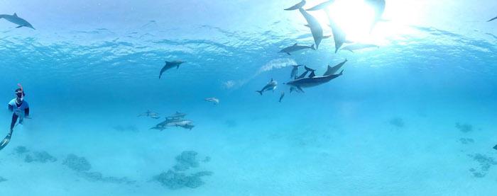 hier ist noch ein bild mit vielen delfinen, die zusammen mit einem mann in einem meer mit einem blauen wasser schwimmen