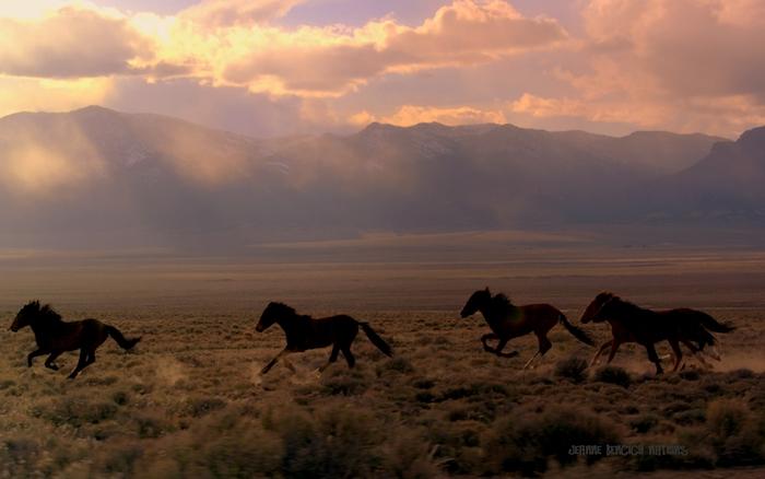 bild mit einer wilden herde mit vier schwarzen, laudenden, wilden pderden mit dichten mähnen, bergen und himmel mit pinken und lila wolken, pferde im sonnenuntergang