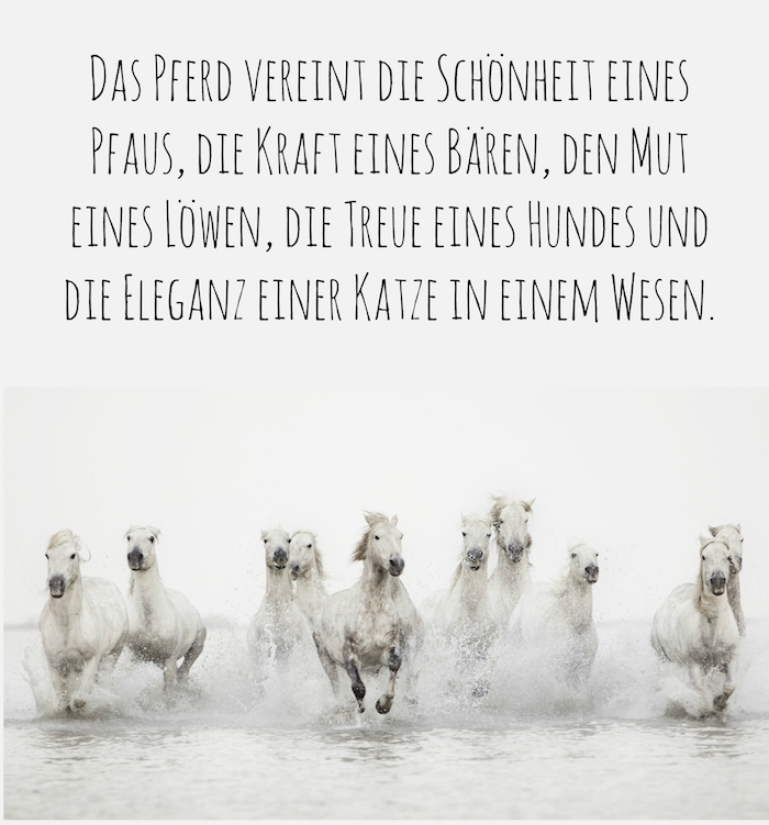 hier ist eine wilde herde mit wilden weißen pferden mit schwarzen augen, schwarzen hufen und weißen mähnen - tollen pferdebild mit einem pferdespruch