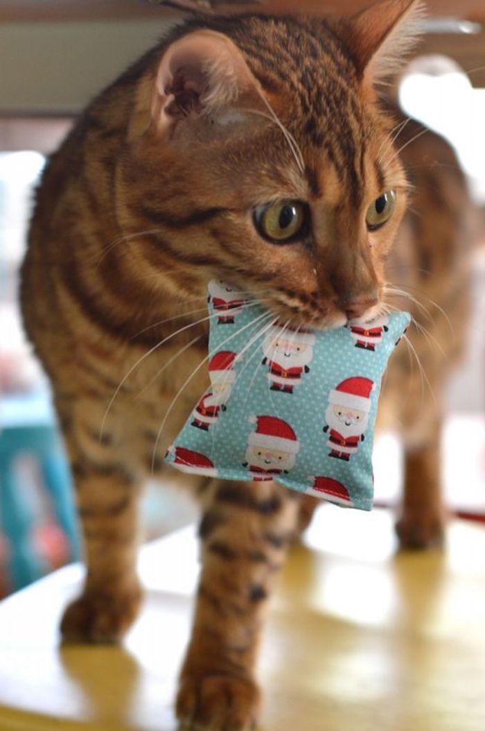 Katzenspielzeug selber machen als Geschenk zu Weihnachten ein Kissen in blauer Farbe