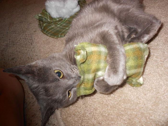 ein entzückendes graues Kätzchen hat grünes Spielzeug umarmt - Katzenspielzeuge selber machen