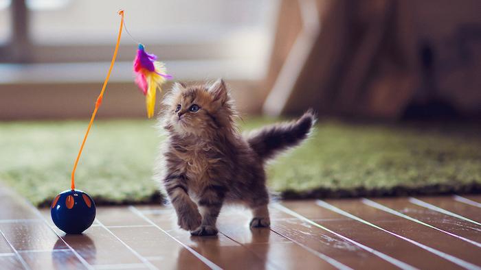 ein kleines Kätzchen das mit einem bunten Katzenspielzeug spielt - Spiele für Katzen