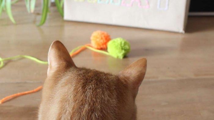 Spiele für Katzen - zwei Pompoms - die Katzen haben kugelförmige Objekte ganz gern