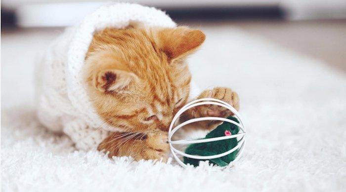 eine rostrote Katze mit einem weißen Klamottchen spielt mit Kugel in dem eine grüne Maus versteckt ist - Spiele für Katzen
