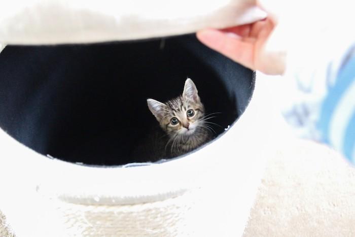 Spiele für Katzen - ein Kätzchen hat sich in dem weißen Korb versteckt - die Katzen lieben Privatheit