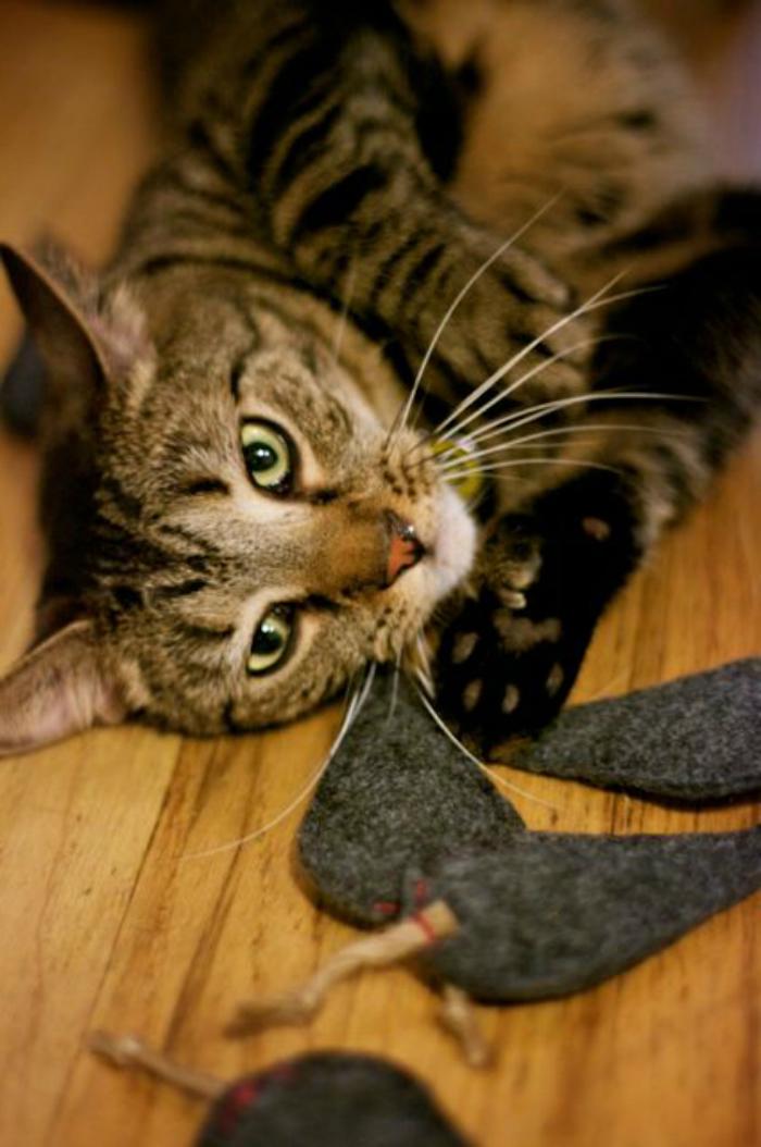 Katzenbeschäftigung - kleine graue Stoffstücke wie Mäuse für eine bunte Katze zum Spielen