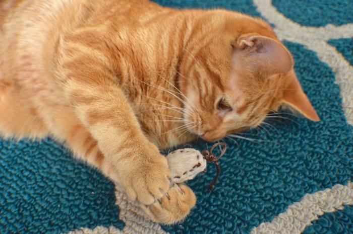Katzenbeschäftigung - eine schöne Katze, die spielt auf einem weichen Teppich