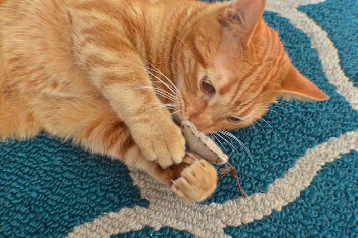 Katzenbeschäftigung - eine entzückende Katze spielt mit einem braunen Kissen