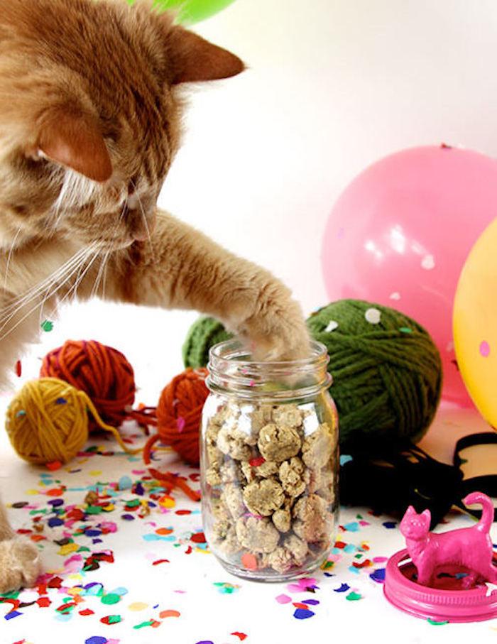 wie die Katze selber treats zu nehmen - Katzenbeschäftigung für kluge Katzen