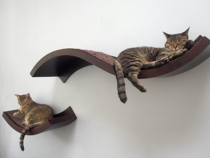 Katzen Intelligenzspielzeug - zwei Regale, wo sich die süßen Katzen ausruhen können