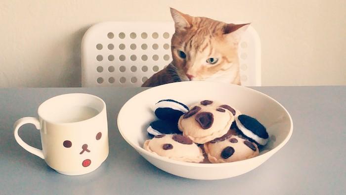 eine Katze, die ein Teller und eine Tasse betrachtet, das Teller ist voll von Spielzeuge in der Form von Keksen - Katzen Intelligenzspielzeug