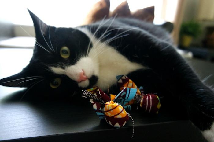 Katzen Intelligenzspielzeug in vielen Farben, eine schwarze Katze mit weißer Miene