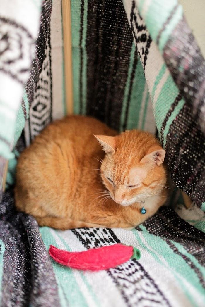eine Katze auf orientalische Decke mit einem Paprika aus Stoff als Spielzeug - Katzenspielzeug basteln