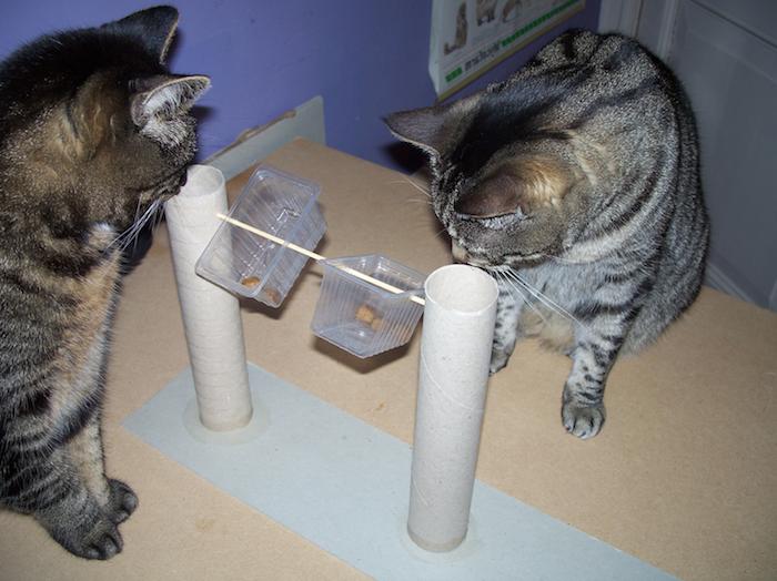 zwei Katzen spielen mit einem aus wiederverwertete Materialien Spielzeug - Katzenspielzeug basteln
