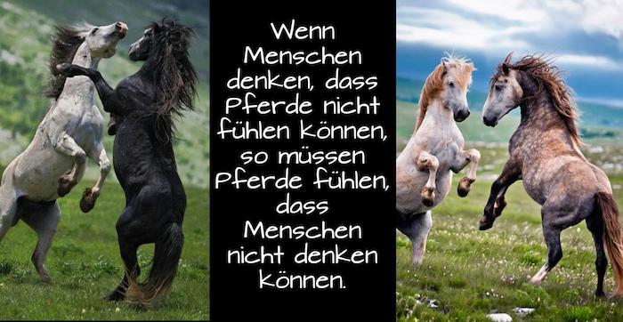 zwei tolle bilder mit vier wilden pferden mit schwarzen und braunen mähnen, bergen mit grünem grass und steinen, himmel mit grauen und blauen wolken, pferdebild mit einem pferdespruch