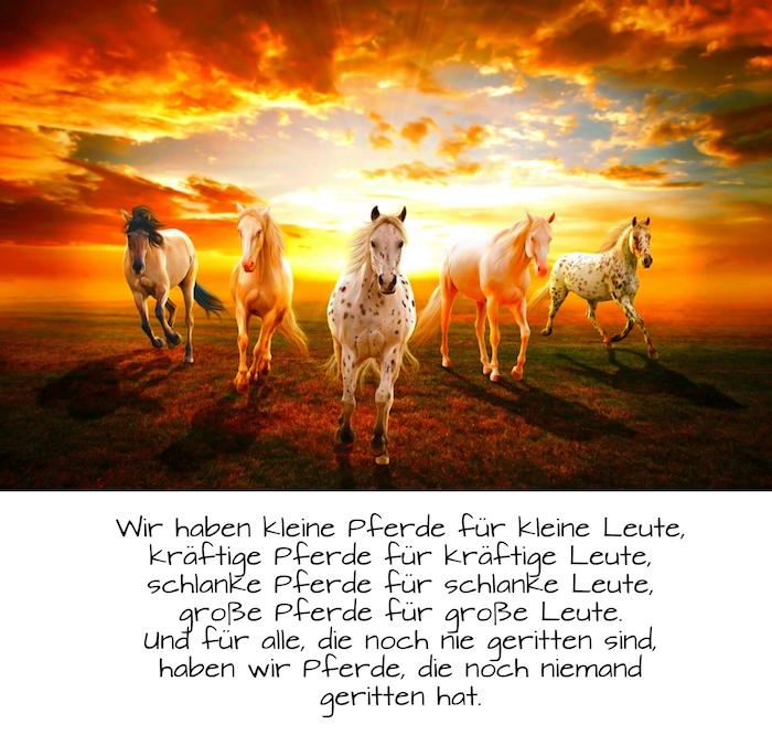 schönes bild mit einer wilden herde mit fünf schönen pferden, ein pferdebild mit einem pferdespruch, himmel mit rotten, gelben und orangen wolken, pferde im sonnenuntergang