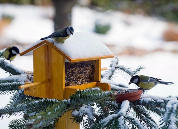 Nistkasten aus Holz mit Samen befüllen, Schnee auf dem Dach, drei Vögelchen, Kieferzweige, mit Schnee bedeckt