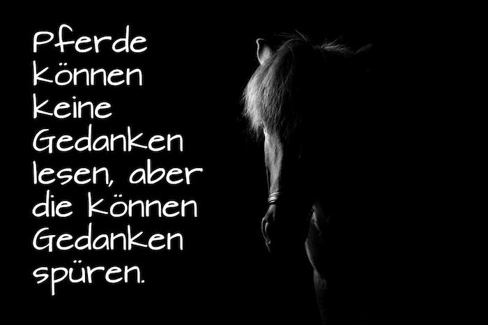 hier finden sie ein kleines schwarzes pferd mit schwarzen augen und einer weißen mähne und einen kurzen pferdespruch, schönes pferdebild