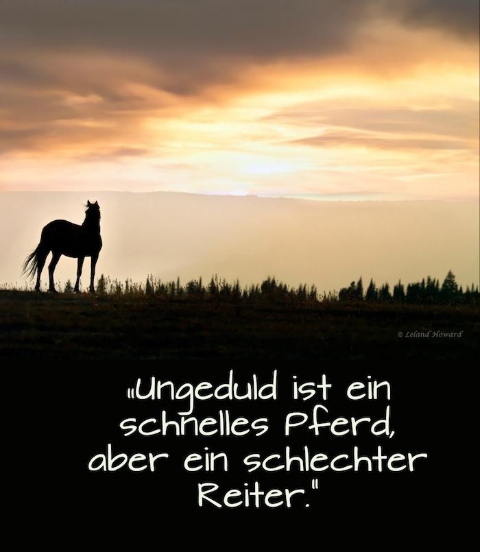 ein bild mit einem kleinen schwarzen pferd im sonnenuntergang, pferd mit einem schwarzen schwanz, wald mit schwarzen bäumen und grass, himmel mit gelben und oraangen wolken