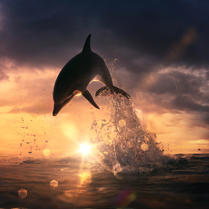 hier ist ein bild mit einem schwarzen delfin, einem sonnenuntergang, grauen wolken und meer - idee zum thema delfine im sonnenuntergang