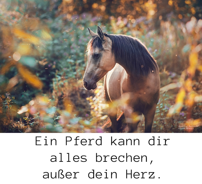 hier ist ein bild mit einem braunen wilden pferd mit schwarzen augen und einer langen schwarzen mähne im wald mit pflanzen mit grünen und gelben blättern