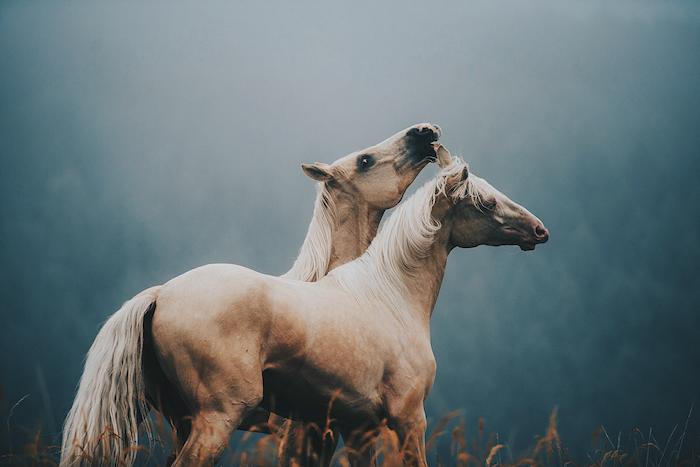 braune pferde mit blauen und schwarzen augen und einem weißen schwanz, einer dichten weißen mähne, grass und wald mit grünen bäumen
