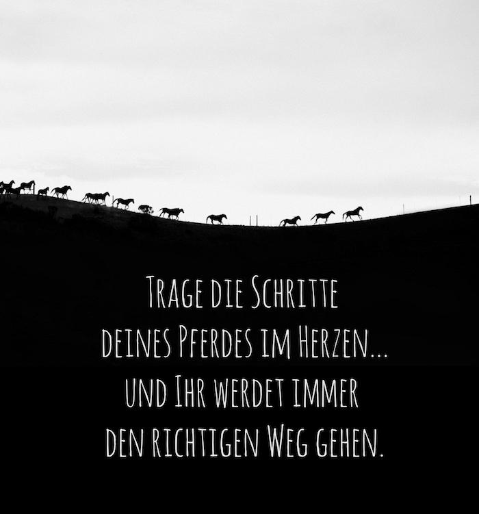 noch ein bild mit einer wilden herde mit schwarzen, laufenden, kleinen pferden mit langen schwarzen mähnen, ein schönes schwarz-weißes pferdebild