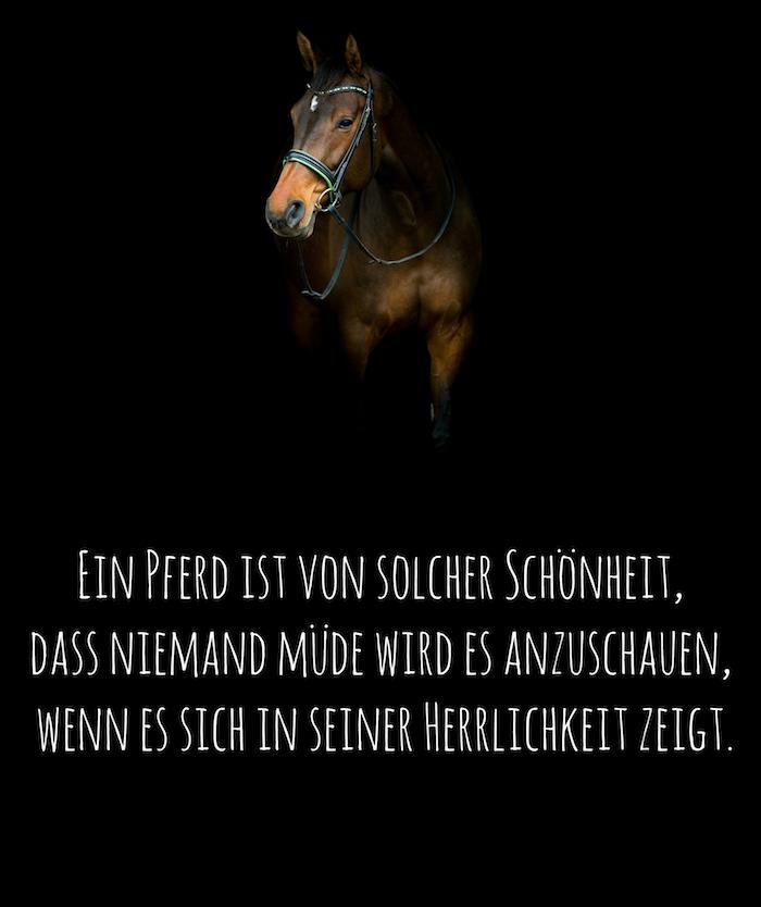 hier zeigen wir ihnen ein bild mit einem braunen pferd mit schwarzen augen und einem kurzen pferdespruch, schönes pferdespruch