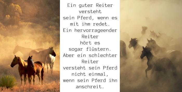 werfen sie einen blicl auf dieses schönes pferdebild mit einer wilden herde mit schwarzen und weißen, grauen und braunen pferden und mit einem pferdespruch, pferdebilder und schöne pferdesprüche