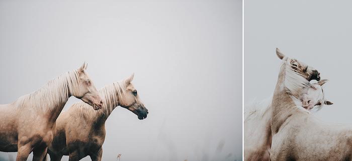 grass, vier braune, wilde pferde mit einer weißen dichten mähne, mit blauen und großen schwarzen augen - idee zum thema pferdesprüche und pferdebilder