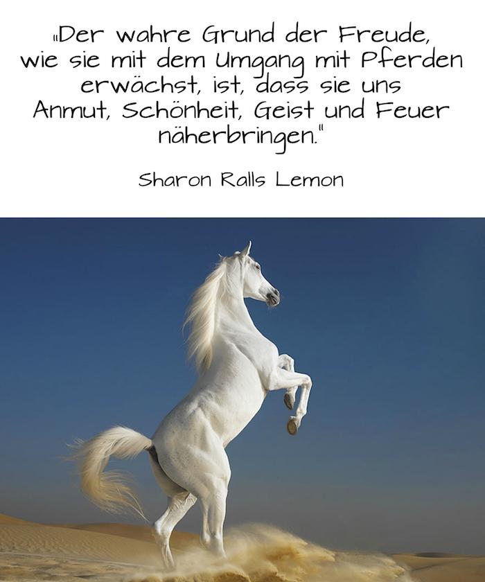 hier zeigen wir ihnen ein weißes, wildes pferd mit einer weißen, langen und dichten mähne und grauen hufen und mit einem weißen schwanz, blauer himmel, pferd in einer wüste mit gelbem sand, pferdesprüche und schöne pferdebilder