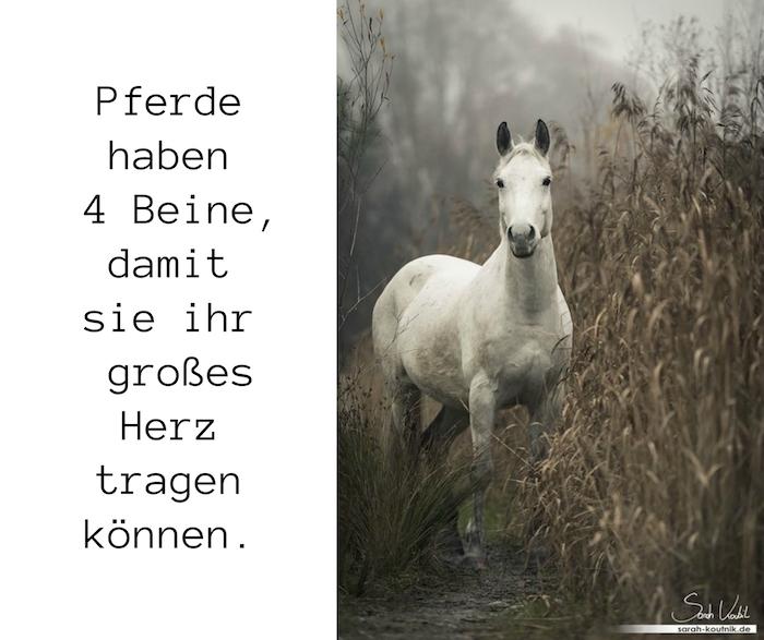 pferdebilder und schöne pferdesprüche zun nachdenken, hier ist ein weißes pferd mit schwarzen augen, einer weißen mähne, bild mit grass und bäumen und mit einem kurzen pferdespruch