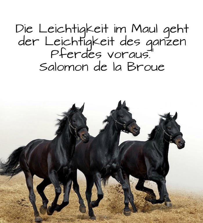 drei laufende pferde mit einer schwarzen mähne und schwarzen augen, bild mit einem gelben grass und mit einem zitat von salomon de la broue, ein kurzer spruch zum thema pferde