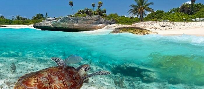 sansibar urlaub genießen tolle tierarten auf der insel schildkröte sansibar bewohner wasser strand küste