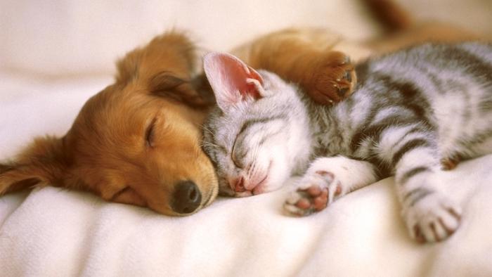 sehr lustige gute nacht bilder für whatsapp - eine graue schlafende kleine katze und ein schlafender kleiner hund