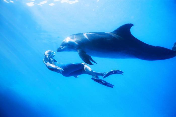 und hier ist ein bild mit einem mann, der zusammen mit einem großen grauen delfin in einem meer mit einem blauen klaren wasser schwimmt