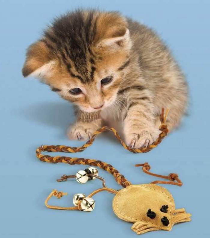 eine kleine Katze mit Spielzeug Maus mit einem langen Schwanz - Katzenspielzeug basteln